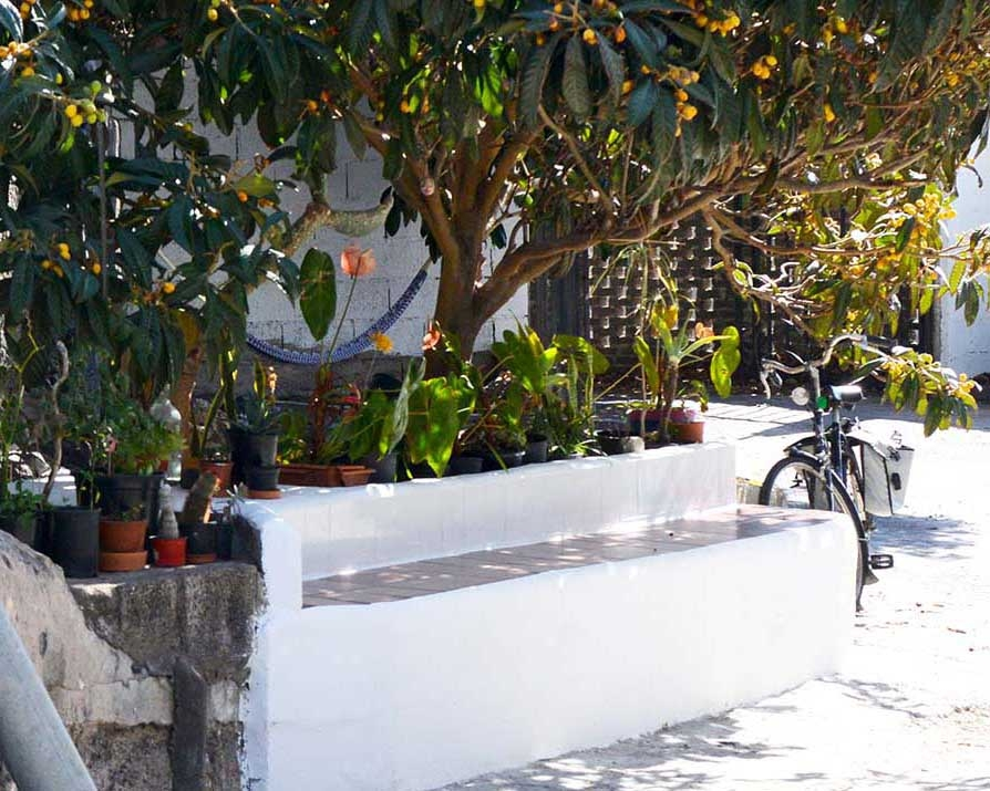 Nispero tree and bench outside Stella Atlántico